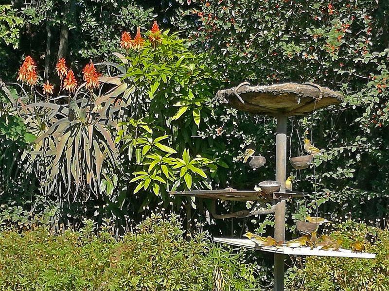 drakensberg-birds