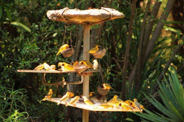 birding-drakensberg-garden